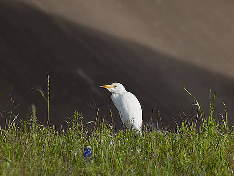 Egret in the City by Joshua House