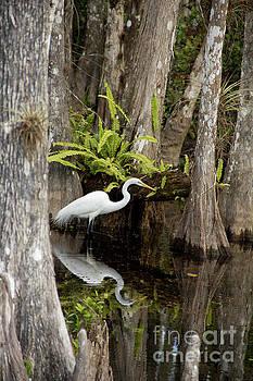 Egret in the Loop by Carol McCutcheon