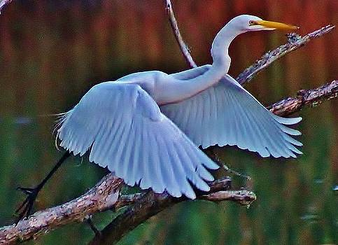 Egret Launching by Thomas McGuire