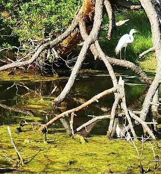 Egret on Assateague Island by Karen Fowler