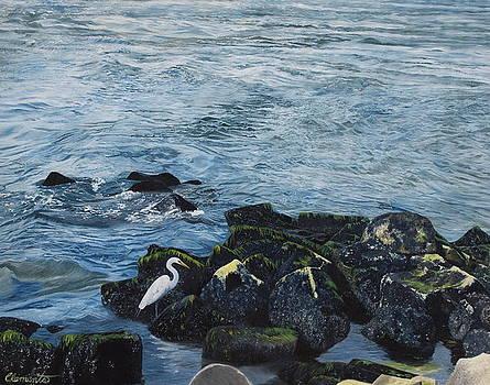 Egret on shore of Barnegat Bay by Barbara Barber