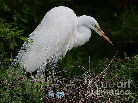 Paulette Thomas - Egret Watching Over Her Eggs