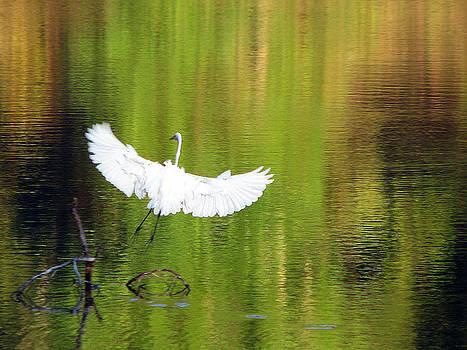 Egret Wings by Dottie Dees