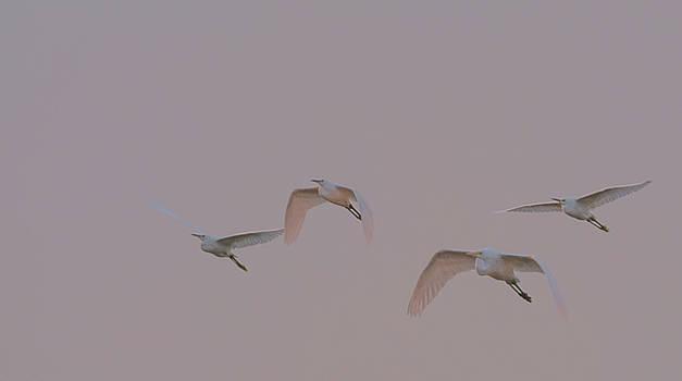 Egrets at Sunrise 1271-011518-1cr by Tam Ryan