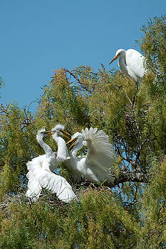Egrets by Catherine Lau