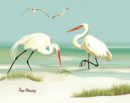 Egrets crabbing by Anne Beverley-Stamps