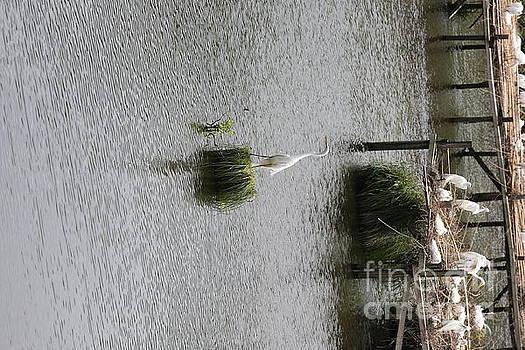 Chuck Kuhn - Egrets Sanctuary II