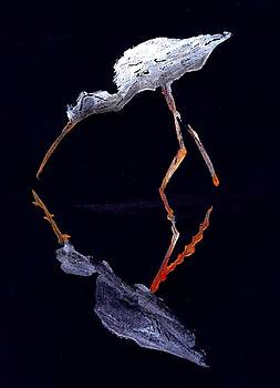 Egrit Wading  by Ana Bikic