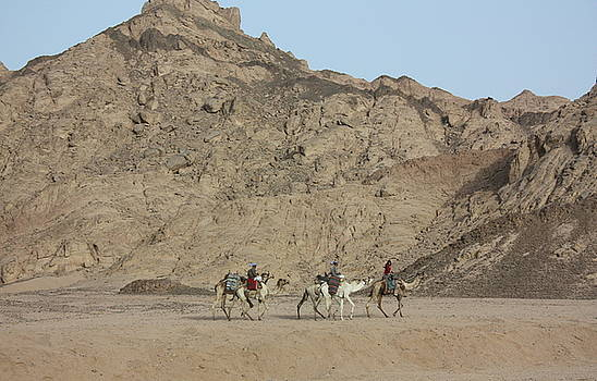 Yvonne Ayoub - Egypt Camels in the Sinai Peninsula Egypt