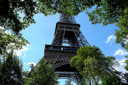 Eiffel through Trees by August Timmermans