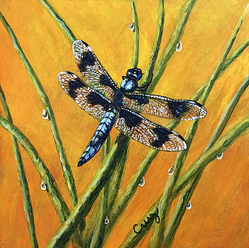 Eight Spotted Skimmer  by Linda Cruz