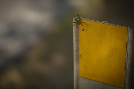 Eisenhower State Park Spider by Jennifer Zandstra