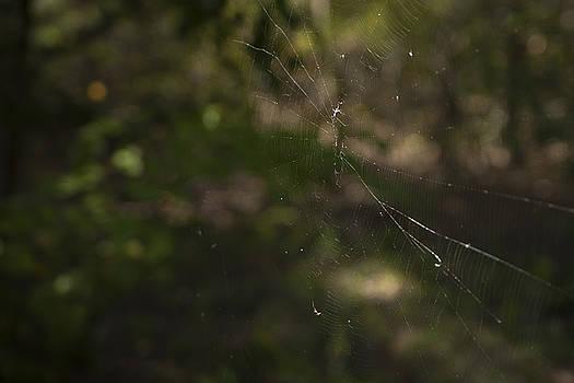 Eisenhower State Park Spiderweb by Jennifer Zandstra
