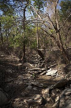 Eisenhower State Park Trail by Jennifer Zandstra