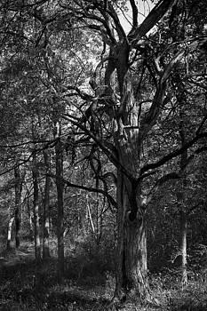 Eisenhower State Park Tree by Jennifer Zandstra