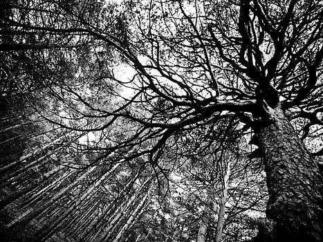 El Bosque by Felix M Cobos