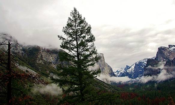 El Capitan From Artist Point C by Phyllis Spoor