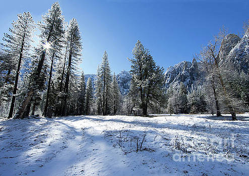Wayne Moran - El Capitan Meadow Winter Yosemite National Park
