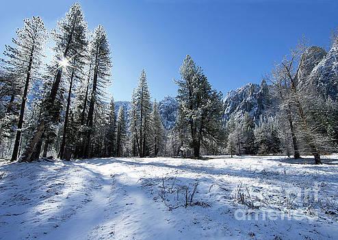El Capitan Meadow Winter Yosemite National Park by Wayne Moran