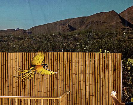 El Paso Zoo - Macaw Parrot by Allen Sheffield