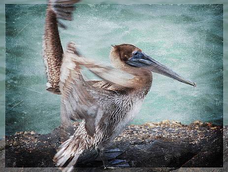 Susanne Van Hulst - El Pelicano