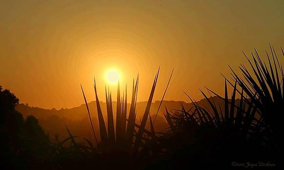 El Sobrante Morning Glow by Joyce Dickens