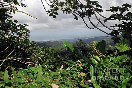 Gary Wonning - El Yunque Rain Forest