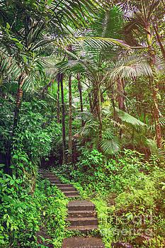 El Yunque Rainforest by Joan McCool