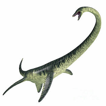 Elasmosaurus on White by Corey Ford