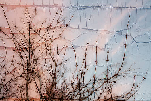 Sandra Foster - Elder Branches Silhouette