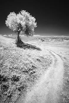 Elderberry and Trail by Alexander Kunz