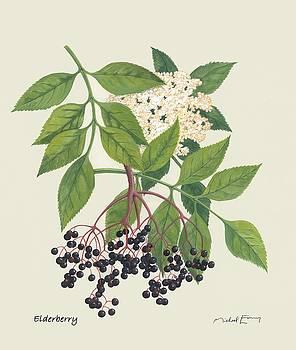 Elderberry - Sambucus canadensis by Michael Earney