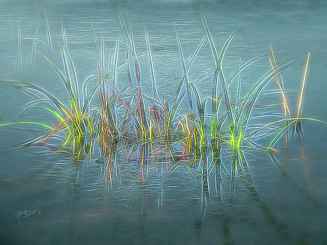 Electric Grass by Rosalie Scanlon
