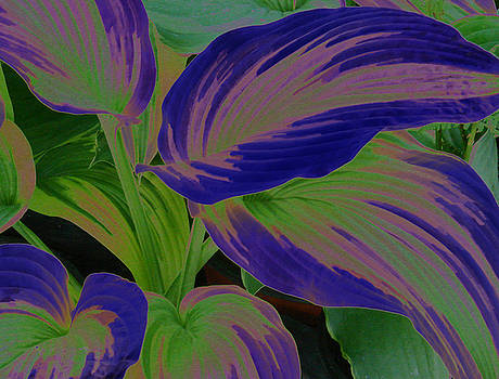 Electric Hosta by Renee Cain-Rojo
