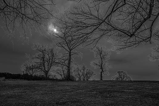 Electric Trees by Jeffrey Friedkin