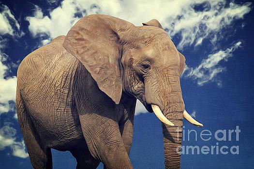 Angela Doelling AD DESIGN Photo and PhotoArt - Elefanten Portrait