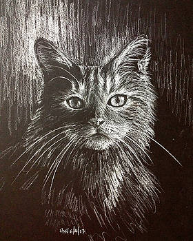 Elegant cat by Holly Whiting