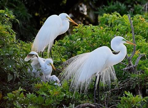 Patricia Twardzik - Elegant Dance of the White Egret