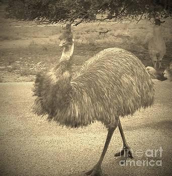 Elegant Emu by Brigitte Emme