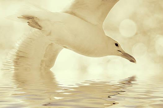 Elegant Flight by Peggy Collins