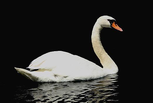 Debbie Oppermann - Elegant Swan