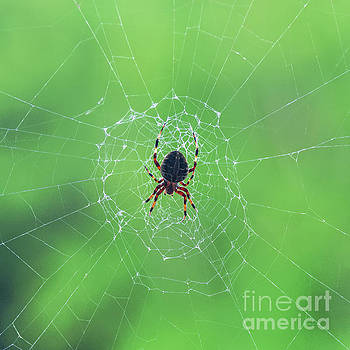 Elegant web with spider Dry Brush Effect by Photo Captures by Jeffery
