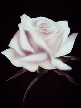 Elegant White Rose by Michele Koutris