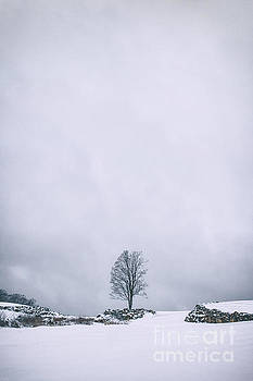 Evelina Kremsdorf - Elements Of Silence