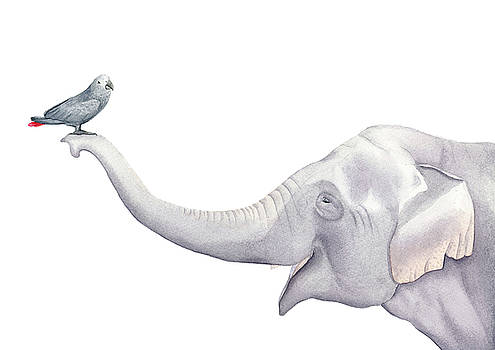 Elephant and Bird Watercolor by Zapista