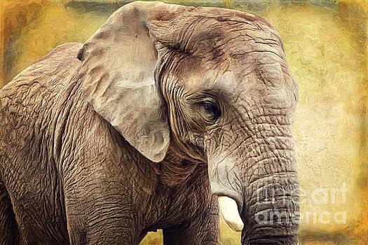 Angela Doelling AD DESIGN Photo and PhotoArt - Elephant