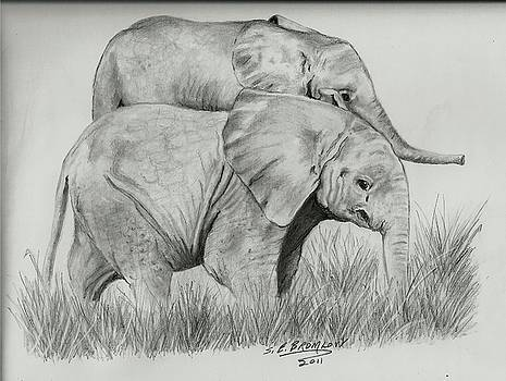 Elephant babies by Susan Bromlow