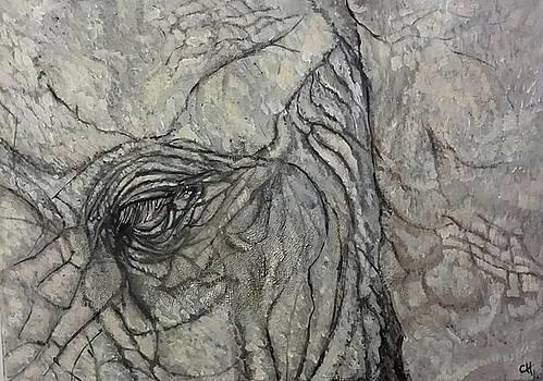 Elephant by Carole Hutchison