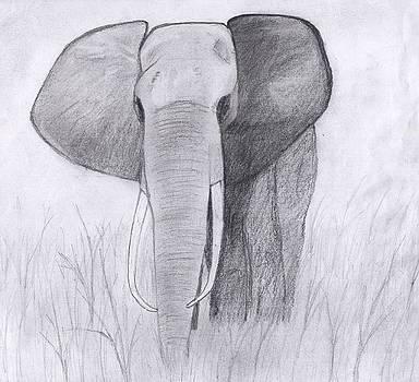 Elephant  by Chris Hall