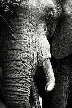 Elephant close-up portrait by Johan Swanepoel